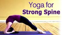 Yoga For Strong Spine – The Various Asanas For Spinal Cord